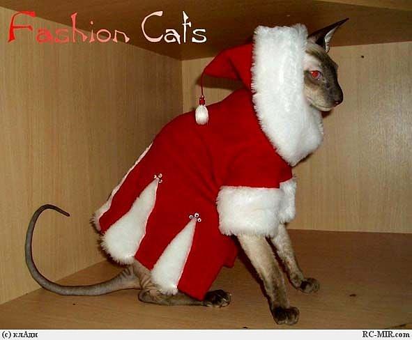 Быстро сшить костюм для кошки своими руками 54